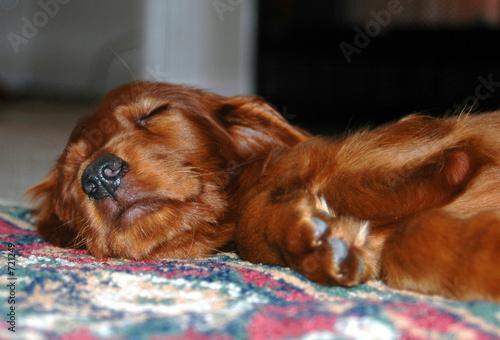 poster of sleeping dog