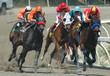 Leinwanddruck Bild - race horses turning into the stretch