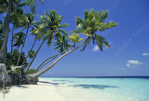canvas print picture maldives
