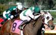 race horses & jockeys