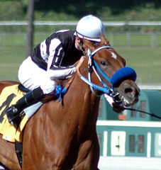 race horse & jockey