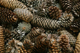 pine cone background poster
