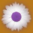 icone 8