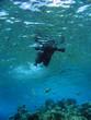 snorkeling in tropical waters