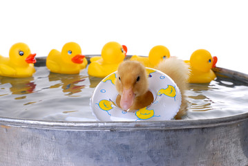 baby duck in water