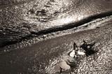 harbor mud poster