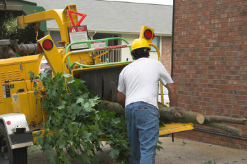 tree worker using chipper