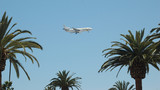airplane and palm trees poster