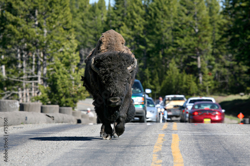 Aluminium Buffel bison in yellowstone national park