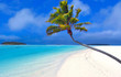 Leinwandbild Motiv paradise palm