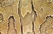 textures – snakeskin #03