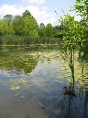 étang,tortue et canard