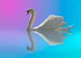 swan in bright colors poster