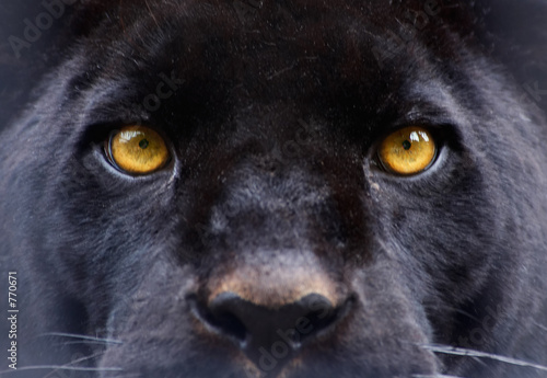 Canvas Luipaard the eyes of a black panther