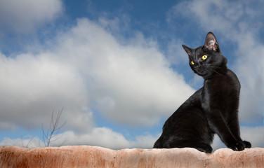 cats #02