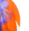 colorful feathers closeup - orange, purple