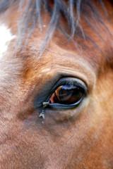 regard du cheval
