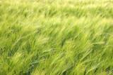 spring greenfield