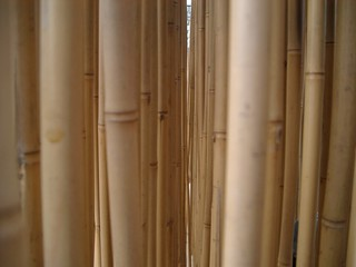 bambou 03