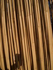 bambou 01