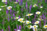 blooming meadow poster