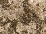 macro texture - concrete - discolored pavement poster