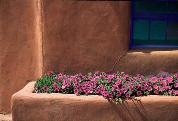 taos flowers