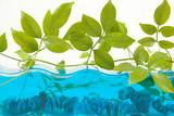 aquarium decor poster