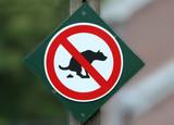 dog litter poster