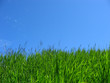 green grass & blue sky
