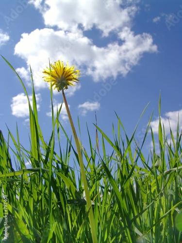poster of     flower dandelion in clouds