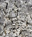 bark of a cork oak poster