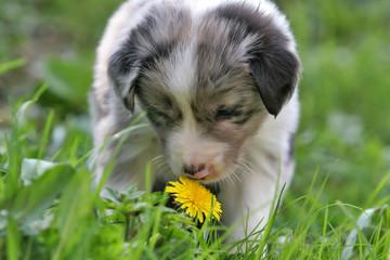 smelling the dandelion