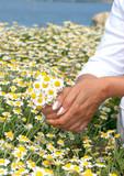 mains jointes autour du bouquet poster