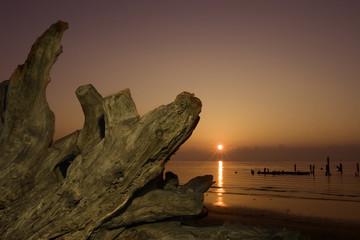 driftwood and rising sun