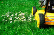 lawn mower and daisies