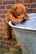 little teddybear climbing