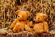 adorable teddybears in hay