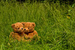 teddybear couple sitting in the grass