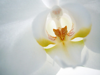 white orchid interior