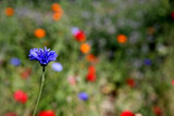 field of colorful wildflowers poster