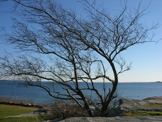 ocean view from behind the tree