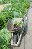 wheel barrow and gardening tools poster
