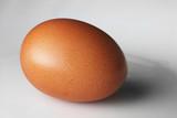 chicken egg poster