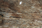 wood texture poster