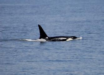 whale 0061