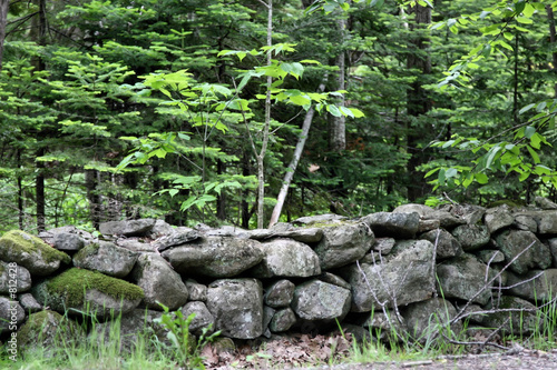 stone wall in woods