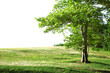 solitary summer