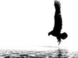 monochrome eagle poster