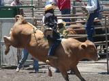 bull & rider poster